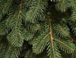 Элитная искусственная литая елка «Alpine» 1,8 метра